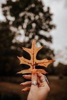 närbild av kvinnans hand som håller torkat blad foto