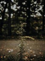 vilda blommor i mörkt fält foto