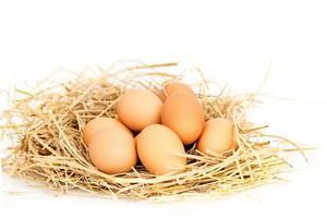 färska ägg på risstrå. foto