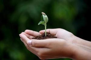 ung växt i händer foto