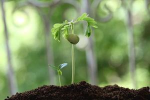 babyväxter som växer från jord