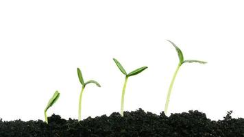 växande växt foto