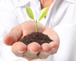 håller grön växt i handen foto