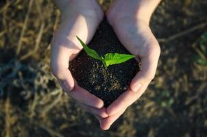 händer som håller plantor med jord på grön bokeh blackground foto