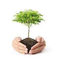 håller grönt träd i handen foto