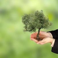 olivträd i handflatorna som en gåva