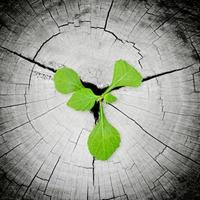 grön planta växer från trädstubbe foto