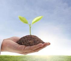 hand som håller en grön planta som spirar från en hög med smuts foto