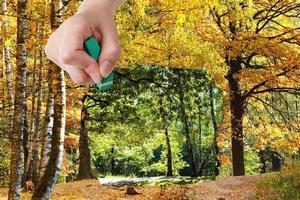 radergummit raderar sommar- och höstskogen visas foto