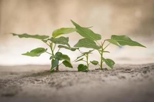 gröna plantor
