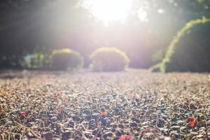 vackert solljus sprids på växterna foto