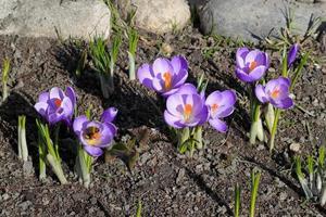blommor och en humla. foto