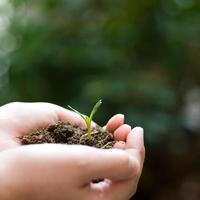växt i handen