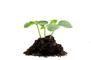 nytt livstillväxtkoncept foto