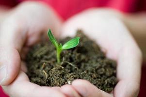 växt i handen foto