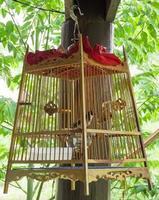 fågelbur foto
