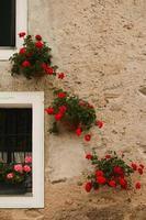 diagonal av blommor foto