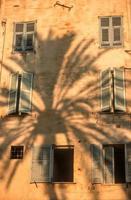 skugga av en palmträd foto