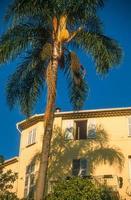 palmträd och gamla hus i menton foto