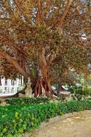 staty i park - platser i valencia foto
