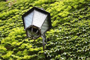 lykta på en grön murgröna fasad i Italien foto