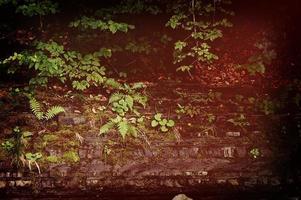 växter på sten foto