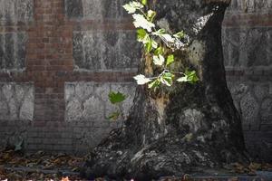 träd i höst foto