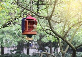 fågelbur på trädet foto