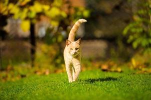 rolig katt på grönt gräs foto