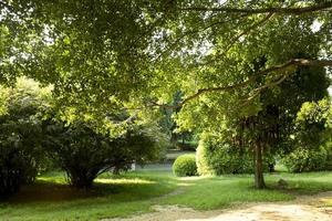 trädgård med en nygjord gräsmatta foto