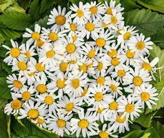 blommig bakgrund. foto