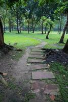 gå vägen i trädgården foto