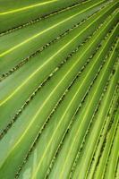 lövblad gröna ränder.