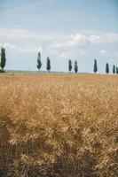 brunt fält, träd och molnig blå himmel foto