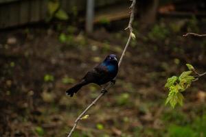 fågel som sätter sig på trädgren foto