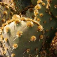 närbild av en kaktusväxt foto
