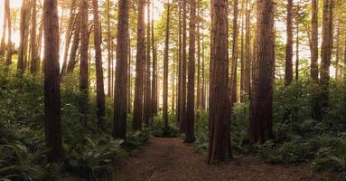 grusväg genom träd i skogen foto