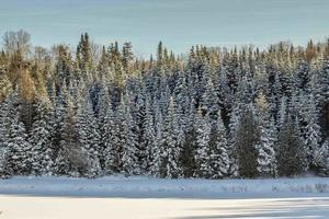 tallar täckta av snö under dagen foto