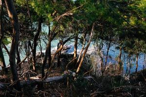 träd och stenar vid vattenmassan