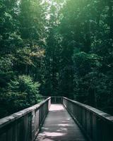 träbro i grön skog foto