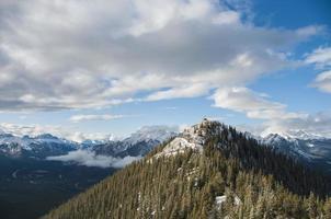 gröna tallar på en snötäckt bergs sluttning foto