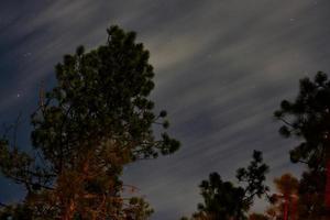 lång exponering av natthimlen med träd i förgrunden foto