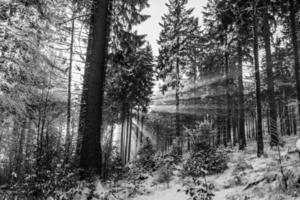 gråskala av solljus som skiner genom träd