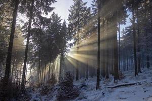 sol genom snöig landskap foto