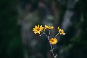 närbild av gul blomma foto