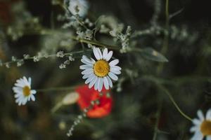 vita och röda blommor