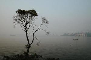 ensamt träd på en dimmig dag