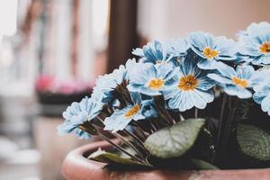 närbild av blå blommor i kruka