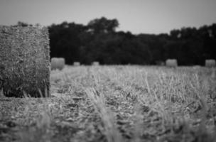 gråskala av höbal och fält foto