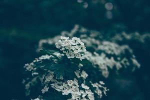 grupp vita blommor